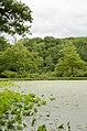 Forest Park, Springfield, MA 01108, USA - panoramio (40).jpg