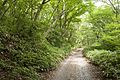 Forest in Mt.Kaba 06.jpg