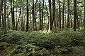 Forest in Yatsugatake 54.jpg