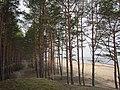 Forest track by the sea near Saulkrasti, Latvia - panoramio.jpg
