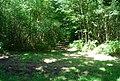 Forest track junction, Oldbury Woods - geograph.org.uk - 856810.jpg
