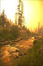 Forestfire5.jpg