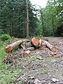 Forestry Commission work in Newent Woods - geograph.org.uk - 550049.jpg