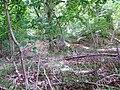 Fort, Mistleberry Wood - geograph.org.uk - 848556.jpg