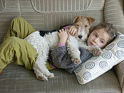 Fox Terrier as family dog