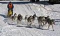 Frauenwald, Hundeschlittenrennen, 6.jpg
