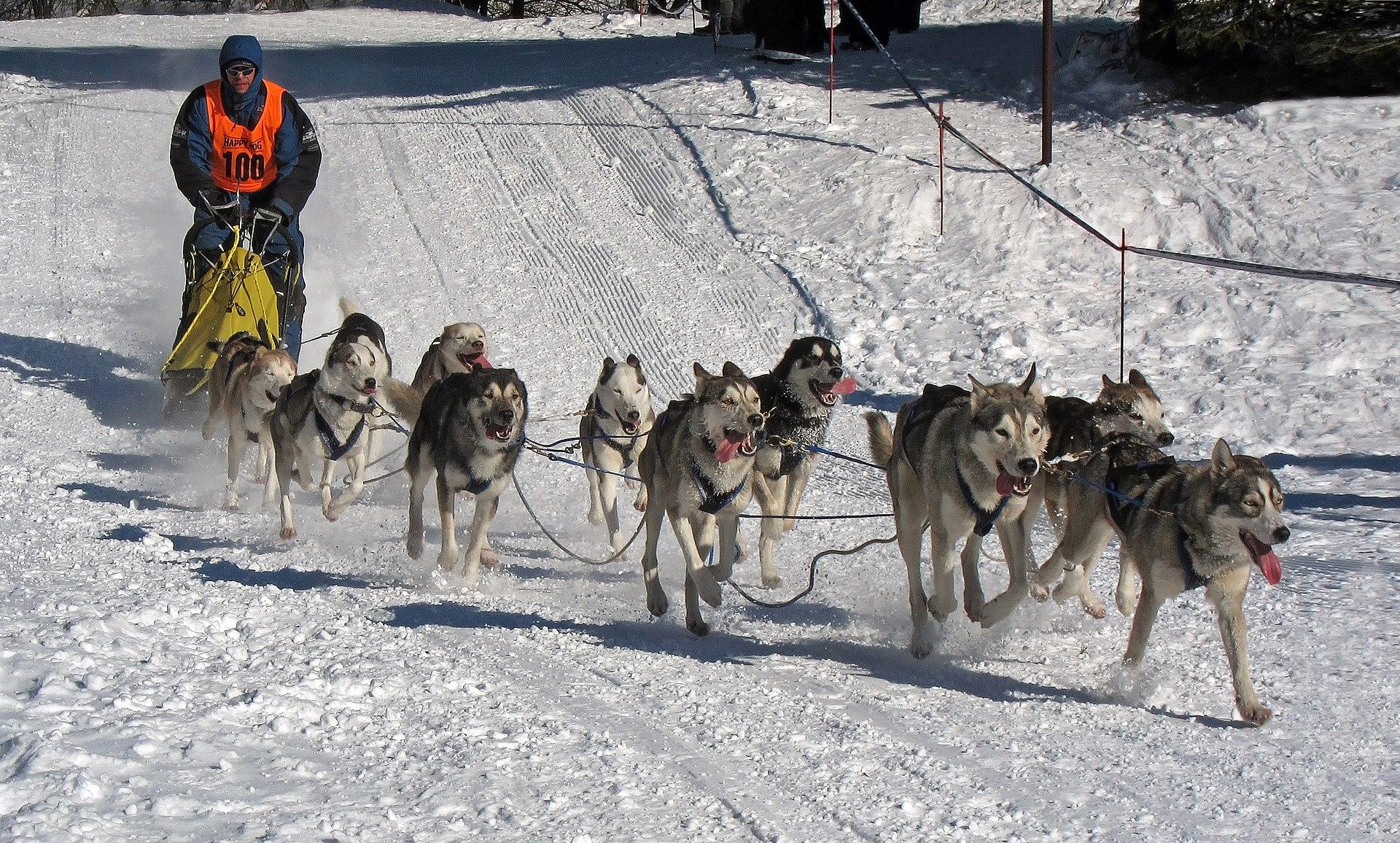 1920px Frauenwald%2C Hundeschlittenrennen%2C 6