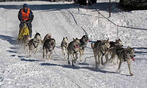 dog sledding - 1200×722