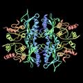 Fructose-1.6-bisphosphatase-pdb-3FBP.png