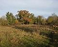 Fulbourn Fen Nature Reserve - geograph.org.uk - 1046532.jpg