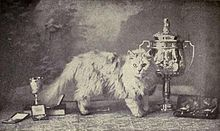 Top: blue Persian. Prize-winner at Westminster in 1899. Bottom: silver Persian. Winner of multiple leading cat shows in 1902.