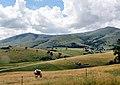 Gajevi, Zlatibor, Serbia - panoramio (9).jpg
