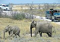 Game Drive at Etosha National Park, Namibia.jpg