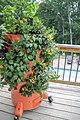 GardenTower2-on-deck.jpg
