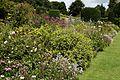 Garden border at Goodnestone Park Kent England 4.jpg