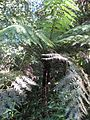 Gardenology.org-IMG 0686 rbgs10dec.jpg