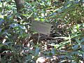 Gardenology.org-IMG 0716 rbgs10dec.jpg