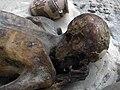 Gebelein predynastic mummy British Museum EA 32751.jpg