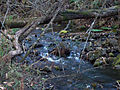 Gfp-minnesota-beaver-creek-valley-another-mini-waterfall.jpg