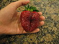 Giant strawberry.JPG