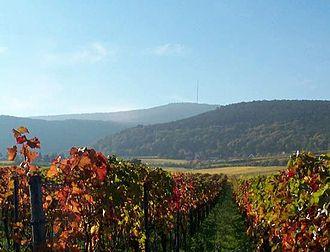 Palatinate (wine region) - Image: Gimmeldingen weinberg im herbst mit weinbiet