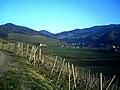 Glottertal Ort - panoramio.jpg