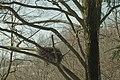 Gniazdo - panoramio.jpg
