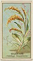 Golden Rod (Solidago Canadensis), from the Flowers series for Old Judge Cigarettes MET DP822006.jpg