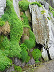 Grass cascades (8045680415).jpg