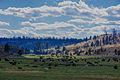 Grassy valley of cows.jpg
