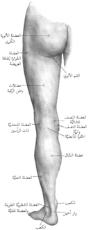 Back of left lower extremity.