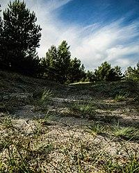 Gray dune, Gray sand.jpg