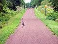 Great Blue Heron on Confederation Trail (4914327105).jpg