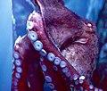 Greater Cleveland Aquarium (19411423760).jpg