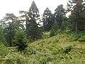 Greece - Grevena - Filippaioi - trees 05.jpg