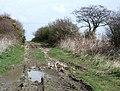 Green Lane, Oubrough - geograph.org.uk - 775434.jpg