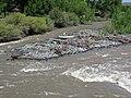 Greybull River (Meeteetse, Wyoming, USA) 5 (28017139487).jpg
