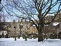 Greyfriars tree in winter - geograph.org.uk - 1629001.jpg