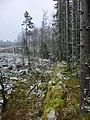 Gropavall mellan Skattegårdens och Bäckagårdens mark (RAÄ-nr Sörby 100) 9677.jpg