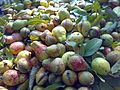 Guavas in Pakistan.jpg