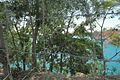 Hồ Khai thác đá núi Dinh - panoramio (1).jpg