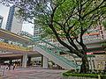 HK CWB HKCL tree 朴樹 Chinese Hackberry n escalators Nov-2013 08.JPG