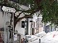 HK SW 上環 Sheung Wan 東街 Tung Street tree March 2020 SS2 06.jpg