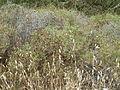 Hadassah Trail P1150407.JPG