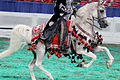 Half arabian costume horse (8024629795).jpg