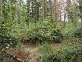 Hambach forest 17.jpg