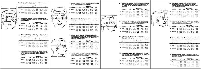 Circunferencia media de la cabeza adulta