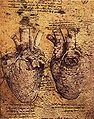 Heart and blood vessels by da Vinci.jpg