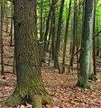 Hemlock Ridge Preserve (Revisited) (6) (15293740076).jpg