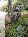Henri Reynders tree.jpg